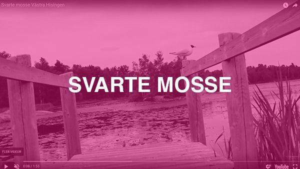 Svarte Mosse – Projektet handlar om att marknadsföra naturområdet Svarte Mosse i Biskopsgården genom en film